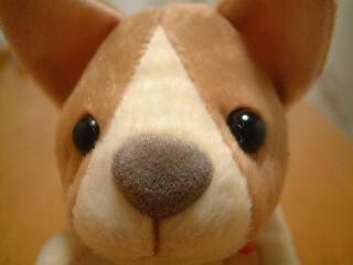 マイニチワワ(?)「THE DOG」風