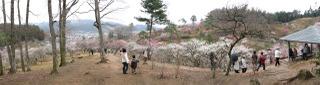 吉野梅郷のパノラマ写真