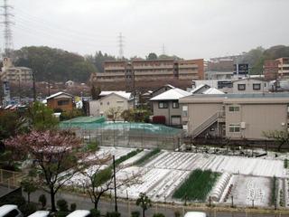 2010年4月17日の雪(神奈川県川崎市)
