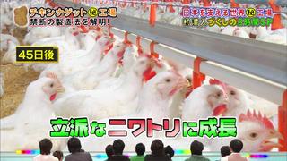 チキンナゲットになる若鶏(リアルスコープハイパーより)