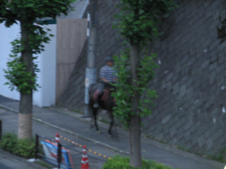 尻手黒川道付近で馬を目撃(1)