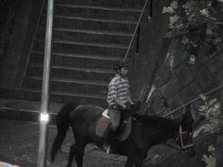 尻手黒川道付近で馬を目撃(2)