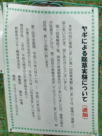 ヤギの除草実験の告知2