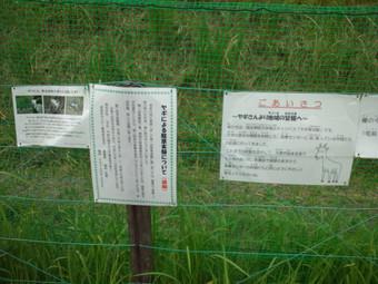 ヤギの除草実験の告知