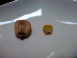 ジャイアントコーン(左)とスイートコーン(右)