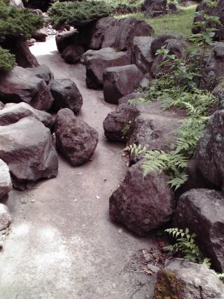 王禅寺ふるさと公園の小川の水が干上がっている1