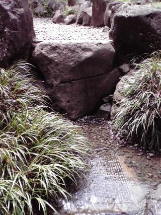 小川の途中にも水の湧き出る場所が(王禅寺ふるさと公園)