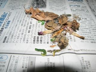 ジガバチの巣の破片