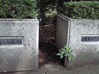 多摩市の公園の花壇(寄り)