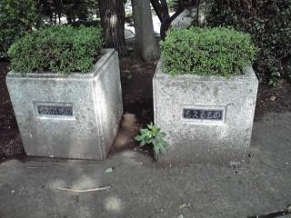 多摩市の公園の花壇
