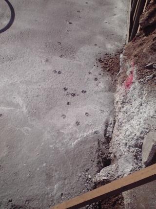 コンクリートに猫の足跡