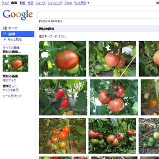 「木になっているトマト」画像をクエリにした検索結果