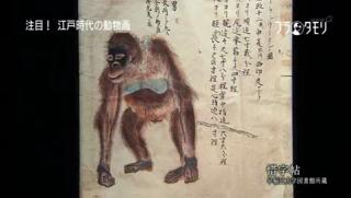 惜字帖 オランウータンの図(ブラタモリより)